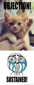 funny-cute-cat-kitten-paw-up-objection-sustained-pics